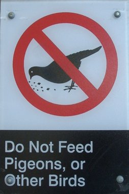 do not feed pigeons, or other birds